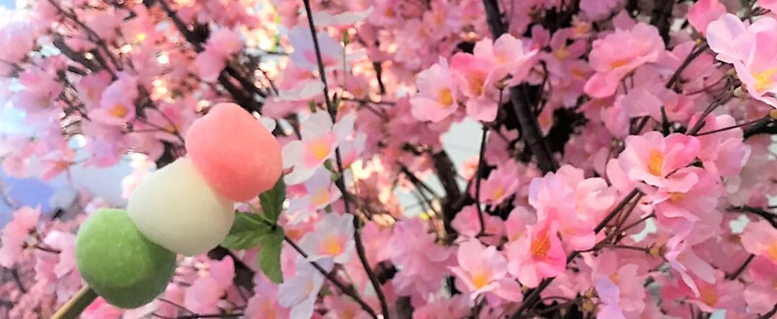 オフィスでお花見!満開の桜室内で♪